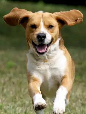 Healthy & happy dog